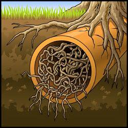 https://streamlinepipes.com.au/wp-content/uploads/2020/12/picture-of-roots-in-pipe.jpg
